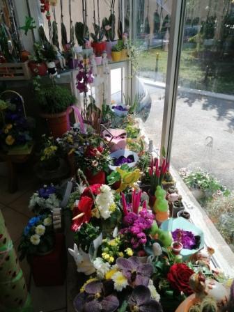 Cvećara Maki M raznovrsnost proizvoda