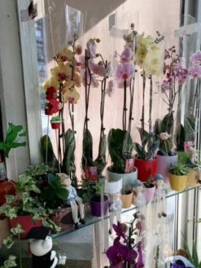 Orhideje 2