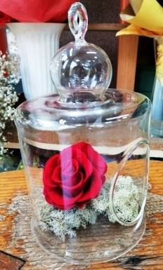 Dehidrirane ruže- crvena