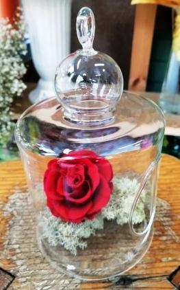 Dehidrirane ruže - crvena