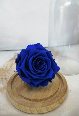 Dehidrirane ruže - plava