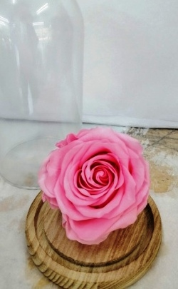 Dehidrirane ruže - roze