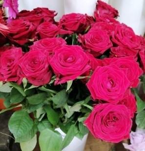 Rezano cveće - Ruže 1