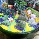 Mini baštica sa kaktusima