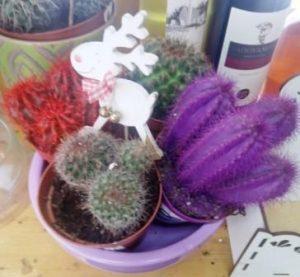 Kaktusi 4