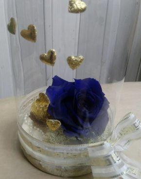 Dehidrirana ruža 4 - plava u zvonu