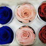 Dehidrirane ruže 2