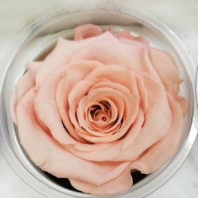 Dehidrirane ruže 2 - bebi roze