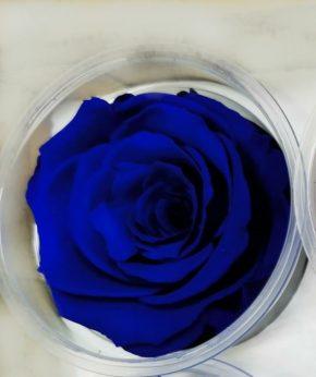 Dehidrirane ruže 2 - plava