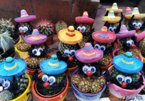 Kaktusi 5 - Meksikano